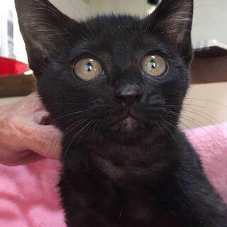 里親決定。黒猫カオルちゃん3ヶ月