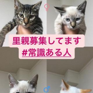 生後5ヶ月弱の子猫4匹です。
