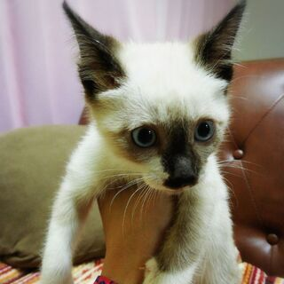 みんな甘えん坊!生後2ヶ月ぐらいの子猫ちゃんズです