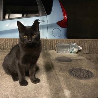 去勢代初期ワクチン代負担可能!超人懐っこい黒猫の子猫です。