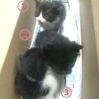 あらしの夜に 3匹の捨て子猫ちゃん