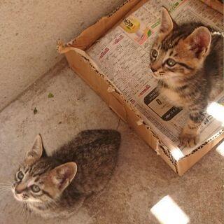 里親さん募集です。生後1ヶ月半の子猫6匹です。 - 里親募集