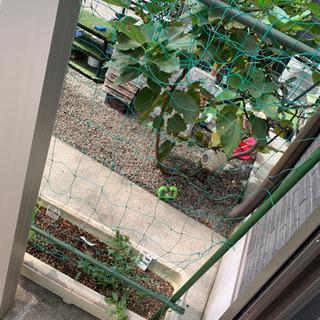 家庭園芸 支柱 グリーンカーテン