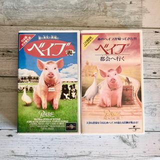 ユニバーサル VHS ビデオ ベイブ 動物映画 ぶた コメディー映画