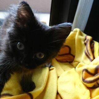 子猫 黒猫の女の子です。
