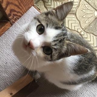 生後5ヵ月くらいの仔猫♀