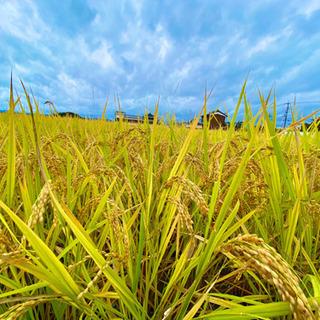 令和2年度✨奈良県 大和高田市産 ヒノヒカリ新米[玄米]