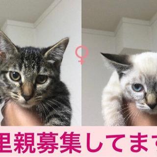 生後5ヶ月の子猫2匹