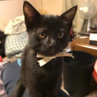 可愛い黒猫くん(2ヶ月)