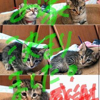 全ての猫様のお家が決まりました😻ご連絡下さった方、お気に入…
