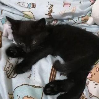 黒い小猫です。
