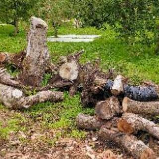薪ストーブ用木材(丸太) 無料