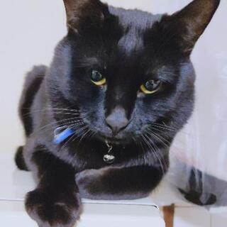 猫の里親大募集