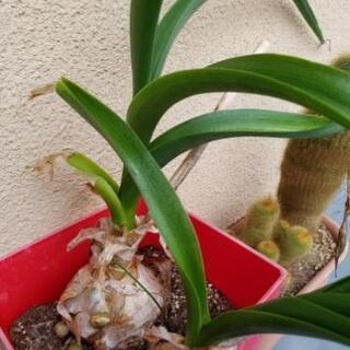 植物の株分け