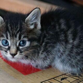 子猫生後1ヶ月ちょっと★5匹★オスメスいます。