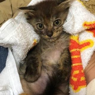 生後2〜3カ月くらいの可愛い仔猫です。