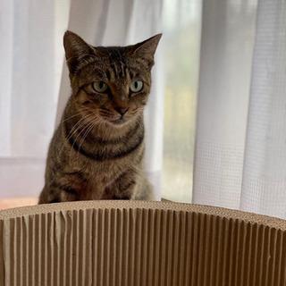 子煩悩なお母さん猫
