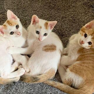 自宅で生まれた子猫3匹 8月6日生まれ