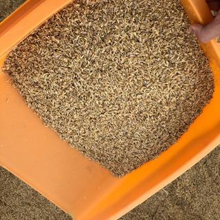 籾殻 2020年産 新米 米袋1袋