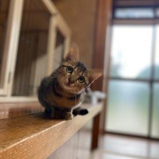 生後2ヶ月の仔猫達が優しい里親さんを待っています!!