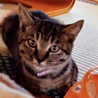 敷地内で鳴いていたカワイイ子猫