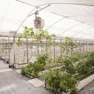 【障がい者採用】11月オープン!新規募集/野菜の栽培スタッフ