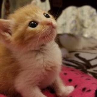 里親決定 生後3週間 子猫