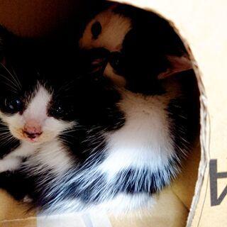 生まれてから2~3週間くらいの子猫が4匹います。