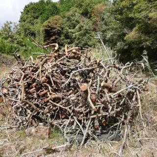♪薪♪小枝♪たき火、キャンプファイヤー、焼きいも等に♪