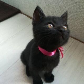 生後2ヶ月頃の黒猫