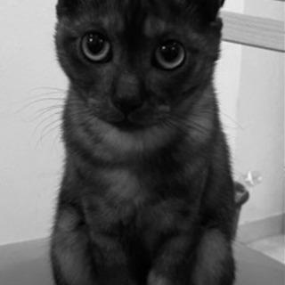 動画有 気付けばアナタを見ている。スモークグレーの家政婦系ネコ...