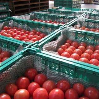簡単軽作業♪トマトの選別作業