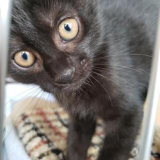 【画像更新】激かわ♥生後2ヶ月くらいの黒猫くん♂🎃💜