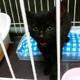 【里親決定】生後3~4週間の子猫(オス)離乳済