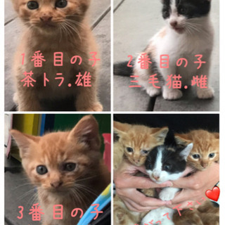全ての猫ちゃん里親見つかりました。 − 岐阜県