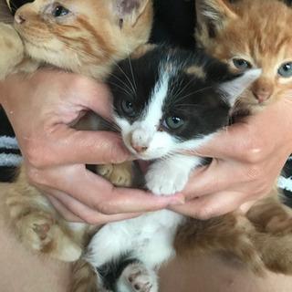 全ての猫ちゃん里親見つかりました。 - 猫