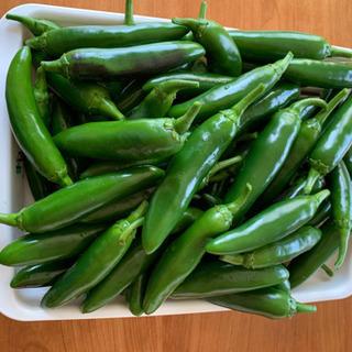 ハラペーニョ 10本 青唐辛子 野菜 辛い