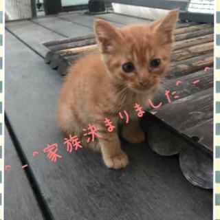 全ての猫ちゃん里親見つかりました。 - 大垣市