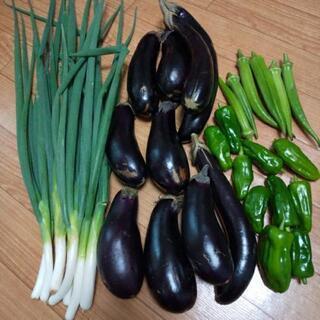 秋のお野菜4点盛り