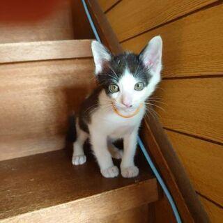 10/27更新。保護猫を迎えよう!生後3ヶ月。No.58 、60、61! - 米子市