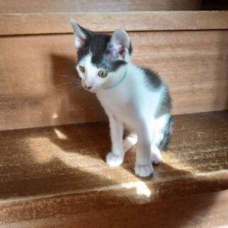 10/27更新。保護猫を迎えよう!生後3ヶ月。No.58 、60、61! - 猫