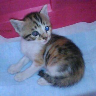 1か月半子猫 緊急募集(2)