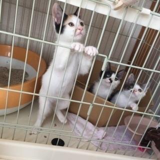 かわいい3姉妹です。里親さん探しています。