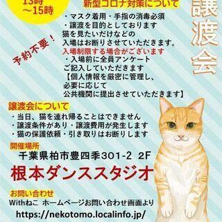 お外から保護した猫たちの家族を探しています