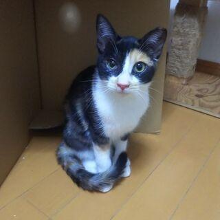 お外から保護した猫たちの家族を探しています  − 千葉県