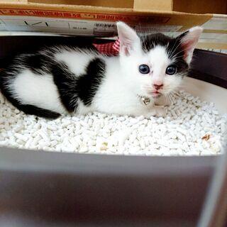 生まれてから3週間くらいの子猫がいます。