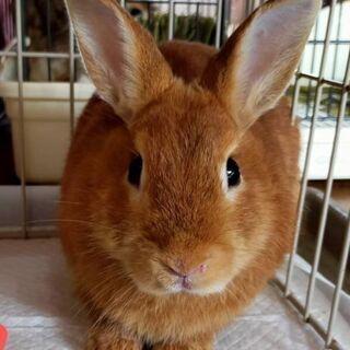 10月18日、ウサギの譲渡会開催します!