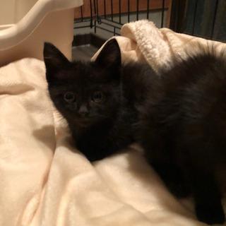 黒猫2匹里親募集