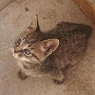 里親さん募集です。生後1ヶ月半の子猫6匹です。 − 宮崎県