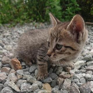 里親さん募集です。生後1ヶ月半の子猫6匹です。 - 猫